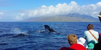whale watch kihei